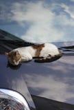 Chat sur la voiture Image libre de droits