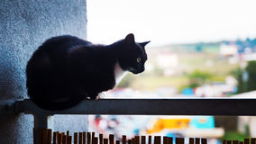 Chat sur le balcon Photographie stock