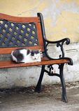 Chat sur le banc Photos stock