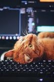 Chat sur le clavier d'ordinateur Images libres de droits