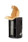 Chat sur le dessus du scratcher de chat photos stock