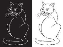 Chat sur le fond blanc et noir Photos stock