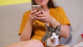 Chat sur le fond des mains avec un smartphone clips vidéos