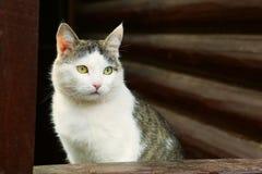 chat sur le fond rural de maison de bloc de pays photos libres de droits