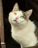 chat sur le fond rural de maison de bloc de pays photographie stock libre de droits