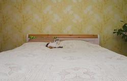 Chat sur le lit Image stock