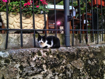 Chat sur le mur Photo stock