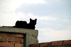 Chat sur le mur de briques Photos stock