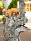 Chat sur le Naga en Wat Chiangman, Chiang Mai Image libre de droits