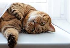 Chat sur le rebord de fenêtre Photo stock