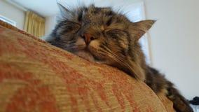 Chat sur le sofa photo stock