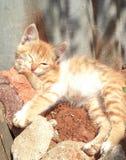 Chat sur le soleil de matin image stock