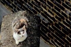 Chat sur le toit Images libres de droits
