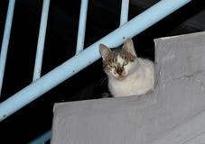 Chat sur les escaliers Photo libre de droits