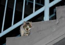 Chat sur les escaliers Photos stock