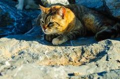 Chat sur les roches Photographie stock libre de droits