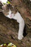 Chat sur un arbre Photographie stock libre de droits