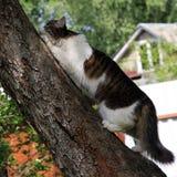 Chat sur un arbre photographie stock