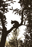 Chat sur un arbre Photographie stock libre de droits
