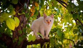 Chat sur un arbre Photo libre de droits