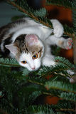 Chat sur un arbre de Noël Photo libre de droits