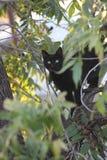 Chat sur un arbre photo stock