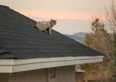Chat sur un toit Images stock