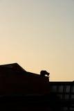 Chat sur un toit chaud de bidon Photo libre de droits