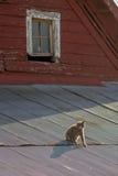 Chat sur un toit chaud de bidon Photographie stock libre de droits