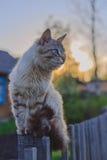 Chat sur une barrière au coucher du soleil Images libres de droits