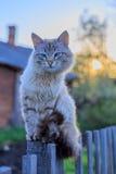 Chat sur une barrière au coucher du soleil Image libre de droits