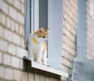 Chat sur une fenêtre photo libre de droits