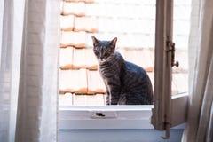 Chat sur une fenêtre Image libre de droits