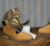 Chat sur une grande chaussure photo stock