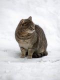 Chat sur une neige Image libre de droits