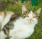 Chat sur une pelouse Photographie stock