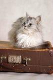 Chat sur une valise Images libres de droits