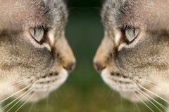Chat tête à tête Image libre de droits