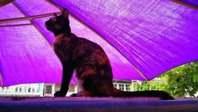 chat thaïlandais de rue Image libre de droits