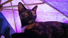 chat thaïlandais de rue Photographie stock libre de droits