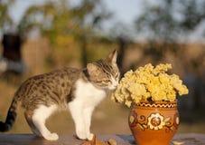 Chat tigré Photo stock