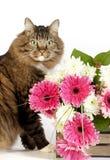 Chat tigré avec des fleurs images stock