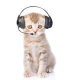 Chat tigré avec le casque de téléphone Sur le fond blanc Images stock