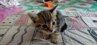 Chat tigré dans ma maison image libre de droits
