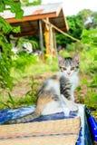 Chat tigré de bébé mignon Photos stock