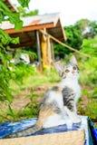 Chat tigré de bébé mignon Image stock