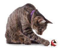 Chat tigré de Brown jouant avec une babiole Photos libres de droits