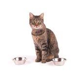 Chat tigré de Brown se reposant à côté des bols de nourriture Image stock