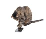 Chat tigré de Brown tapant sur un écran intelligent de téléphone Images libres de droits