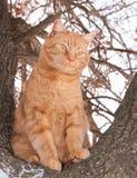 Chat tigré de gingembre se reposant haut dans un arbre Image libre de droits